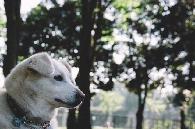 softbank-dog.jpg